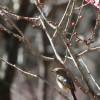 春 遠からじ